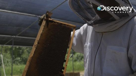 20131228蜜蜂滅亡新發現 copy