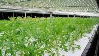 對抗氣候變遷與糧食危機,LED植物工廠前景看漲,台北國際光電週主辦單位光電協進會 […]