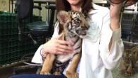 新竹關西六福生態度假旅館推出「小老虎住房專案」;除了一睹孟加拉小老虎的可愛模樣, […]