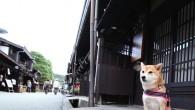 網路票選「十大招牌旅館狗部長」名單揭曉,日本網友心中「超可愛」、「最想跟牠玩」的 […]