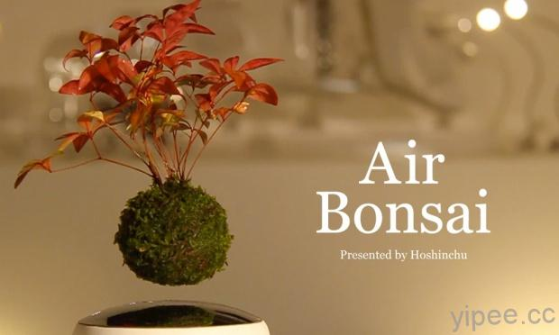 air-bonsai-INT