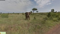 (Elephant grazing in Kruger National P […]