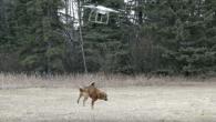 最近無人空拍機很夯,不僅可以空拍美麗的風景,有些快遞公司把它拿來送宅配,但有國外 […]