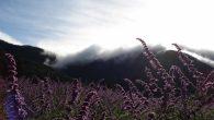 #武陵農場的鼠尾花 之前就有運動的習慣,參加路跑、練瑜珈,在答應跟朋友一起登百岳 […]