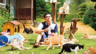 終極的貓咪療癒故事! 帶來滿滿的喵喵大庭院!