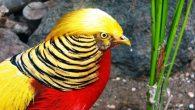自從美國總統川普上任後,中國特有種的「紅腹錦雞」有跟著爆紅,因為牠有一頭和川普非 […]