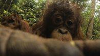 對於喜歡拍攝野生動物的攝影師來說,把相機藏在森林裡捕捉動物的身影或被充滿好奇心的 […]