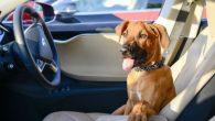 家裡有養狗的朋友,有沒有過開車帶愛犬出門,但卻因為某些原因,愛犬必須留在車上的經 […]