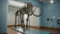 最近在比利時Lier City Museum 利爾市博物館展出一隻高 3.5公 […]
