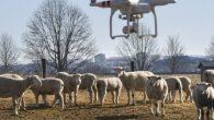 風吹草低見牛羊這景象雖然無法在台灣看見,但在紐西蘭、澳洲、英國…等地 […]