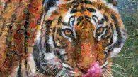 視覺設計藝術家 Charis Tsevis 創作了動物系列作品,包括狐狸、老虎、 […]