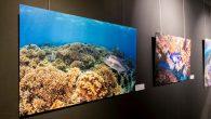 近年來台灣自由潛水風潮興起,越來越多人加入潛水行列,也希望透過實際行動喚起大眾環 […]