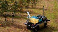 葡萄採收需要人工一一採收,因此需要趁著太陽微弱的清晨時分早起到果園採收。只是人工 […]