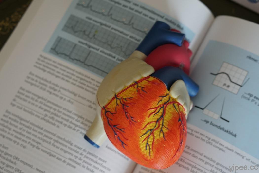 預防心臟疾病 4 撇步,保護它從走路開始!