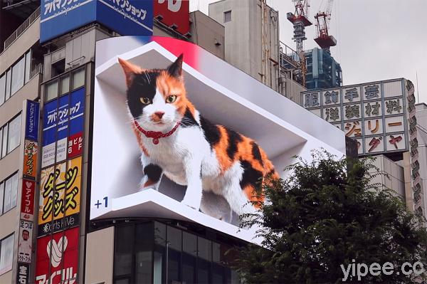 【 LIVE 直播】 6 公尺巨大三色貓站在日本新宿的 3D 螢幕上,還會和路人互動超吸睛!