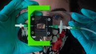 美國德州萊斯大學(Rice University )的生物醫學工程師利用 3D  […]